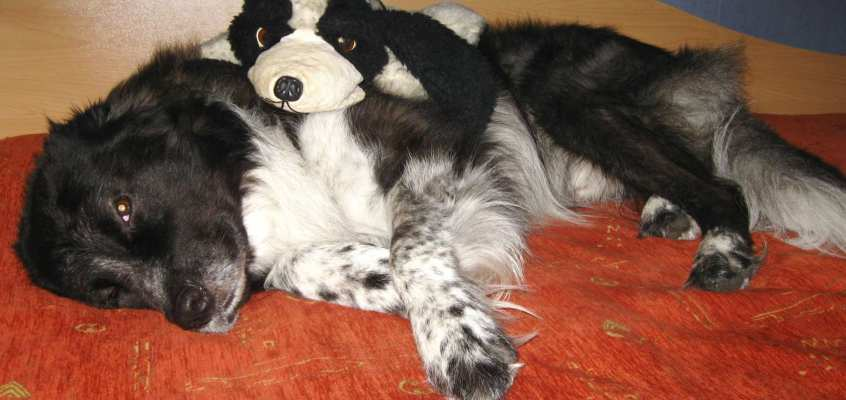 Choosing stuffed animals for pets