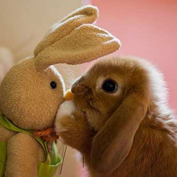 15 pictures of animals and stuffed animals together