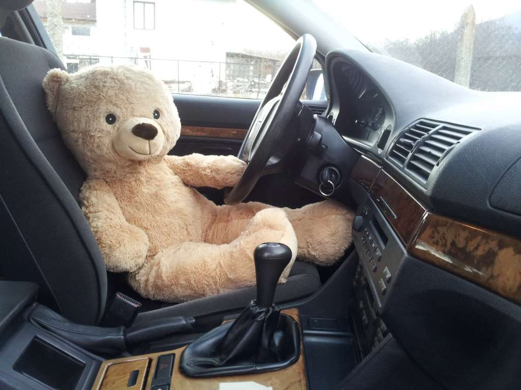 Happy Teddy Bear Day with cool facts about the favorite stuffed animal