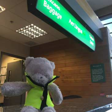 Cork Airport looks for the owner of this cute teddy bear