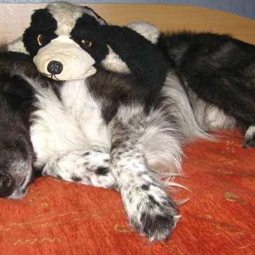 Happy World Dog Day!