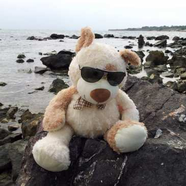 How to take stuffed animals on vacation