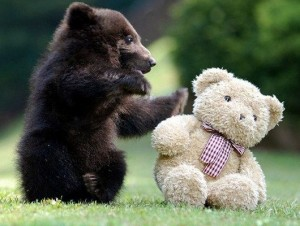 bear-and-teddy