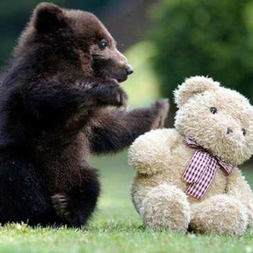 Barnstaple prepares a Teddy Bear Picnic on August 13