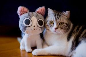 cat-and-cat