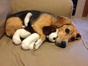dog-and-stuffies