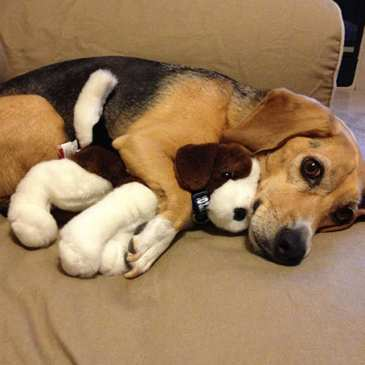 Can your pets get really jealous of your stuffed animals?