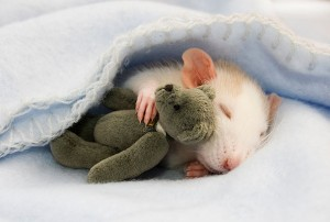 Top 10 reasons to stil sleep with stuffed animals