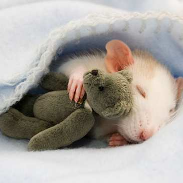 10 reasons to sleep with stuffed animals
