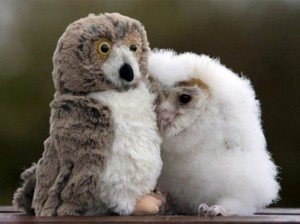 owl-and-stuffie