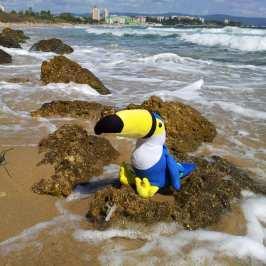 stuffed animals on vacation