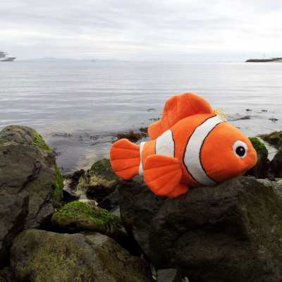 This is Nemo, he comes from Nessebur