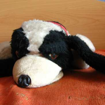 Stuffed animals and the memories they carry