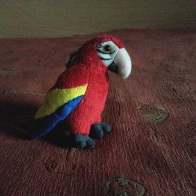 Parrot here hails from Nice, France