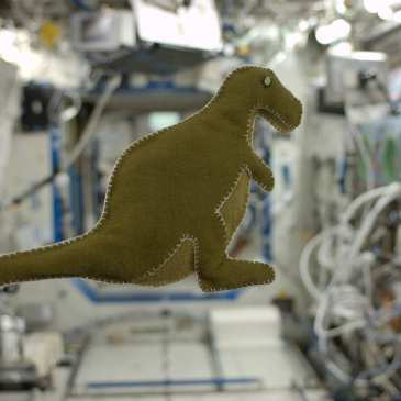 Stuffed animals in space