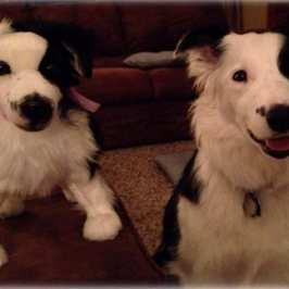 Cuddle Clones makes a stuffed animal version of you pet