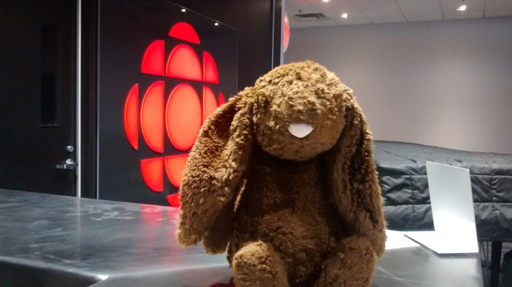 Stuffed Bunny lost at the Nova Scotia Museum of Natural History