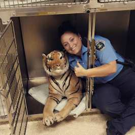 Officers called to protect neighbourhood from a tiger, turns out to be a toy