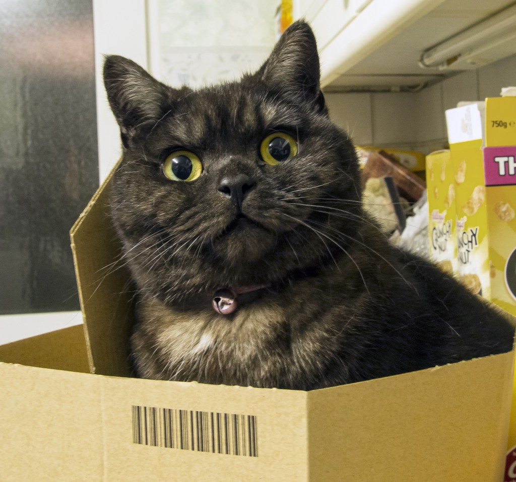 Internet beloved cat videos could be used for therapy