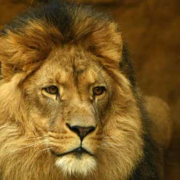 Cecil the lion turns into money making machine