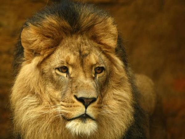 Zimbabwe won't charge the man who killed Cecil the lion