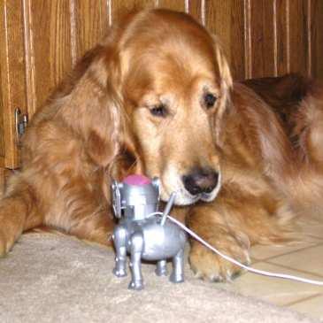 Will robot pets replace stuffed animals?