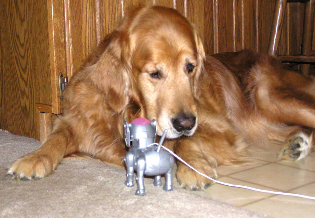 robot pets versus real pets for Wiki researchers have been writing reviews of the latest robot mops since 2016  the 8 best robo mops updated august 05, 2018 by lydia chipman video review.