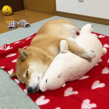 Check out this cute dog sleeping like his stuffed animal