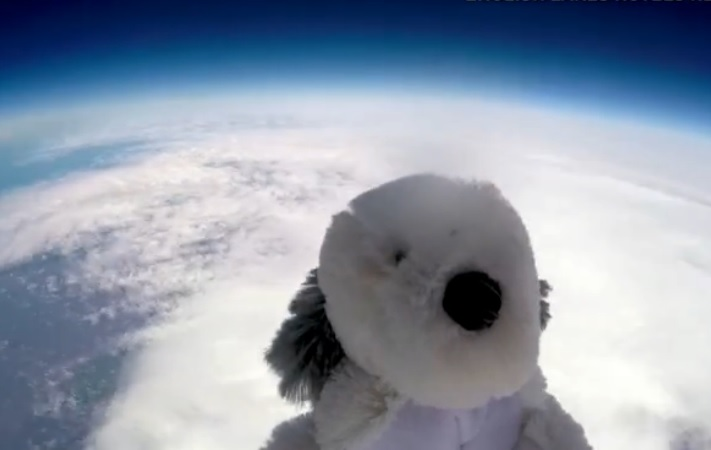 Stuffed toy dog has gone missing after a space mission (video)