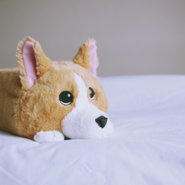 Students created this plush corgi out of memory foam