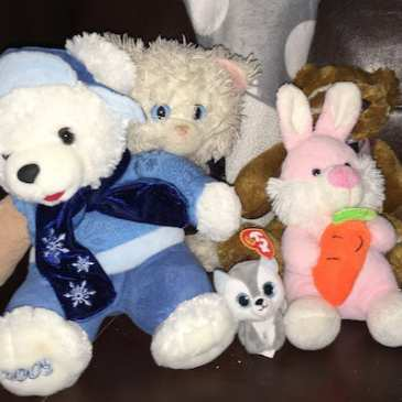 Teddy bears are looking for their owners after the Winnipeg Teddy Bear Picnic