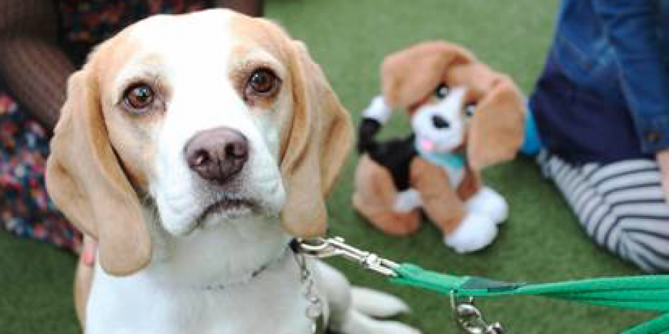 Hasbro and Battersea Dogs and Cats partner to help rehome pets