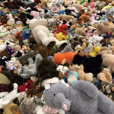 The Charlotte Checkers gather almost 2000 stuffed animals during their Teddy Bear Toss