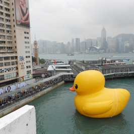 Rubber duck may be ideal for baths, but also for bacteria