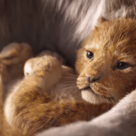 Disney shows the first trailer of The Lion King remake