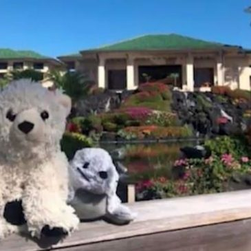 Stuffed animals get left behind in Hawaii and get a nice vacation out of it